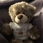 Suny-Bär